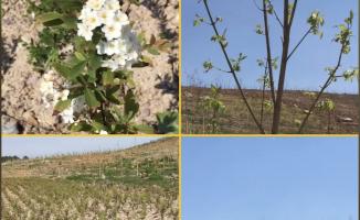 5 Hektarlık Shell Türkiye Ormanı Kuruluyor
