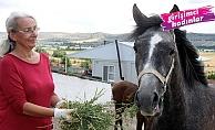 Emekli öğretmen Muzaffer Durmuş at sevgisi sayesinde girişimci oldu