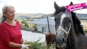 Emekli öğretmen yarış atı yetiştiriyor