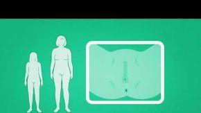 Kadının cinsel organı, kadınlarda cinsellik hakkında herşey